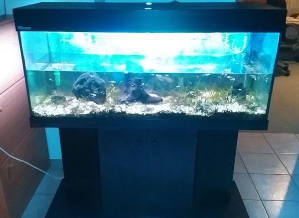 Aquarium 240 l kleinanzeigen kaufen verkaufen bei for Aquarium mit unterschrank