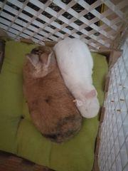 Kaninchen suchen neues