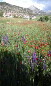 Gartenpflege und Rasen