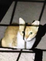 Katze Rossi sucht