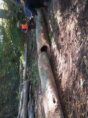 Buchenholz zu verkaufen Stamm- u