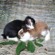 Süße Kaninchenbabys suchen