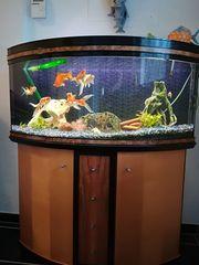 Panorama Aquarium