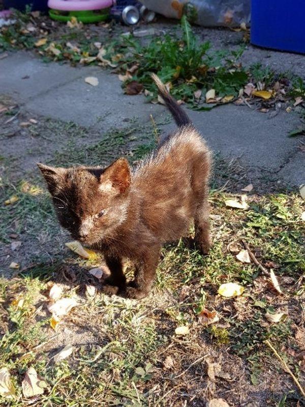 Kätzchen suchen - Kleinlangheim - MischlingskatzeKatzenbaby3 junge Kätzchen suchen ein neues Zuhause.Sie sind 12 Wochen jung und sind nur an das Leben draußen gewöhnt. Weitere Angaben: Wurf, schwarz. - Kleinlangheim