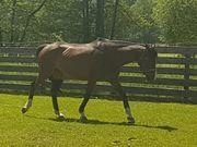 Freizeit Pferd
