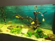 Aquarium Juwel Lido 120 zu