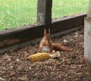 Junge Eichhörnchen von 2018