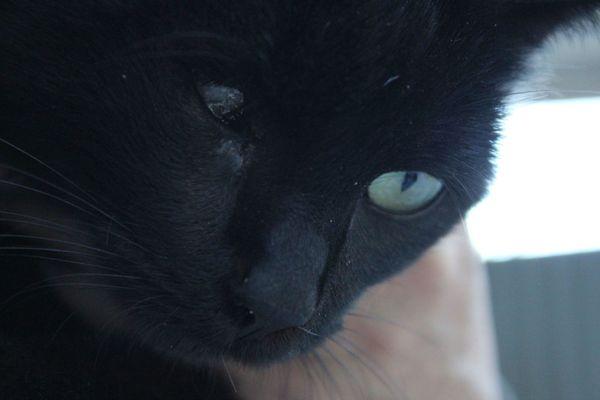Katze mit handicap - Viernheim - MischlingskatzeerwachsenDiese hübsche junge Katze ist rund ein Jahr alt. Leider hat sie nur ein Auge, was sie selber aber nicht stört. Gibt es eine liebe Familie, die dieses handicap ebenfalls nicht stört und sie gern adotpieren möchte? Si - Viernheim