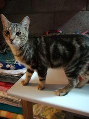 Katzenkind Petit sucht ein Zuhause