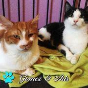Aris und Gomez suchen ein