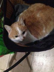 Vermisste Katze seit