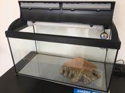 Aquarium (50L) mit
