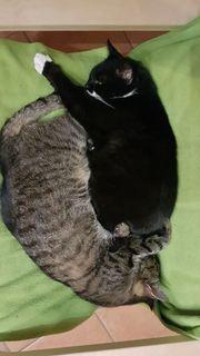 Katzenpaar sucht neues Zuhause