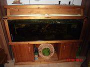 Aquarium 375 L
