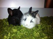 Kaninchenbabies zu verkaufen