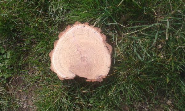 Baumscheiben, Holzscheiben,