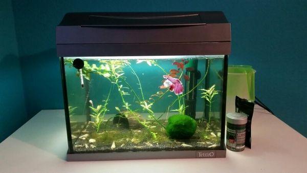 thermometer aquarium kleinanzeigen kaufen verkaufen bei deinetierwelt. Black Bedroom Furniture Sets. Home Design Ideas