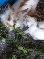 2 kaninchen + großes