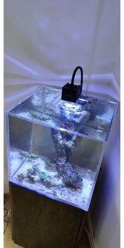 Acrylglas Plexiglas Nano Meerwasser Aquarium