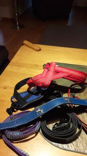 Hunde-Halsbänder u Leinen