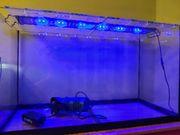 EHEIM Aquarium mit LED und