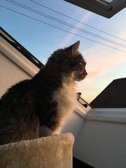 Katzendame sucht neues Zuhause