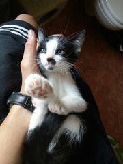 Katzenbabys / Kitten / Babykatzen***